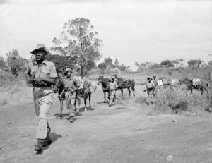 Kings African Rifles moving supplies during Mau Mau Rebellion
